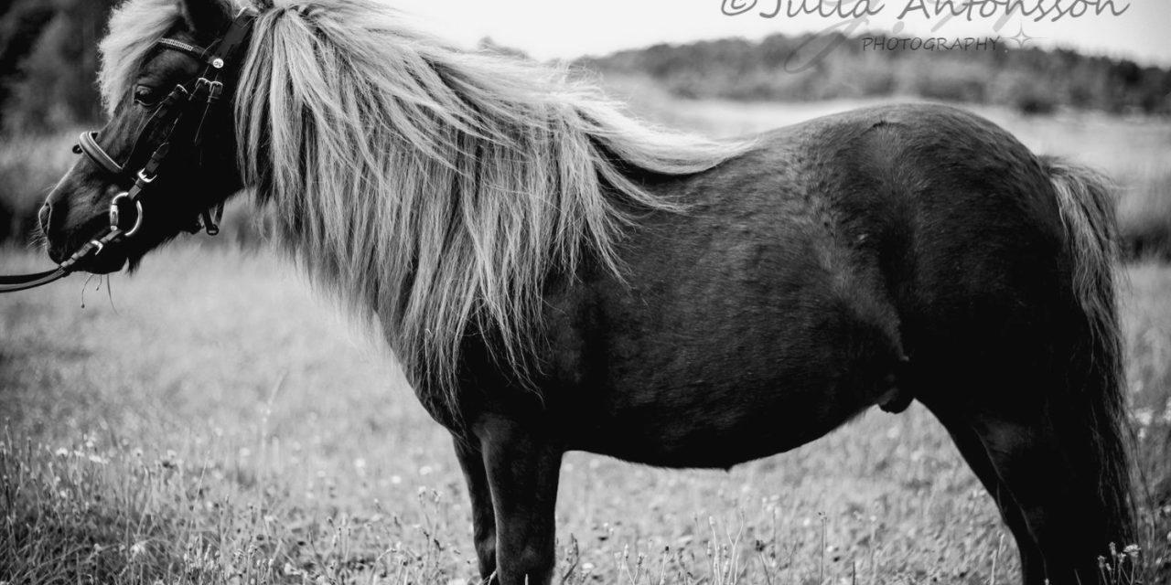 Snygg-ponnyn