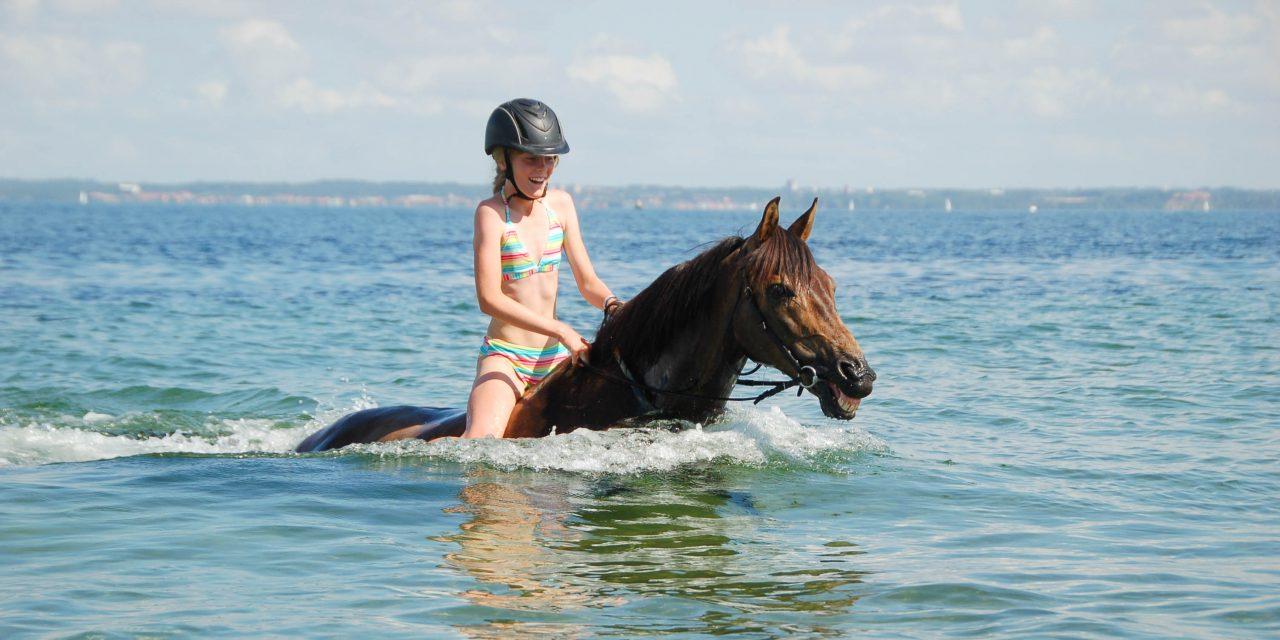 Häst-bad