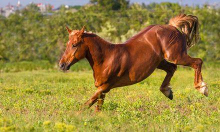 5 häftiga hästkonton och frågor till Carl Hedin