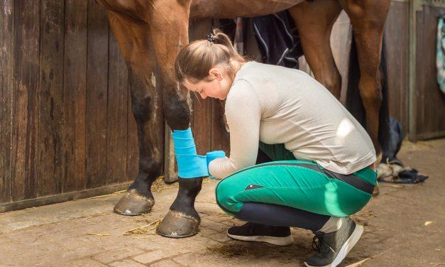 Vem skulle du kunna bli hästskötare åt? – TEST
