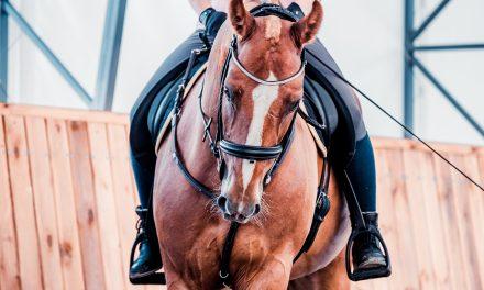 Del 1. Rida ny häst – så gör du