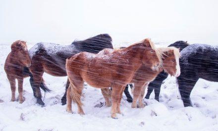 Hästen på vintern – Snö och kyla