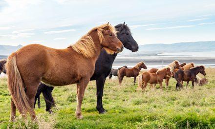 Hästens färger