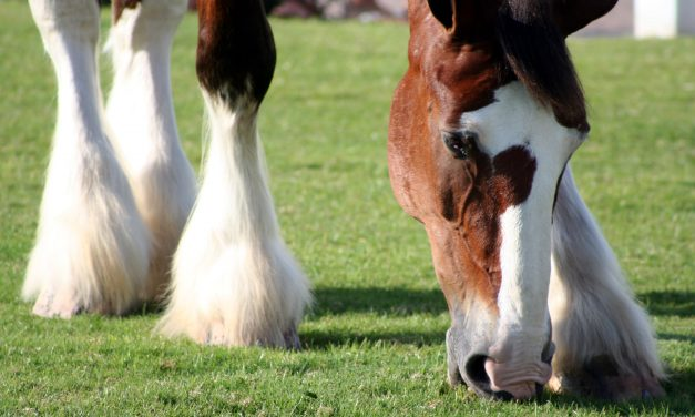 Vilken hästtyp passar dig bäst?
