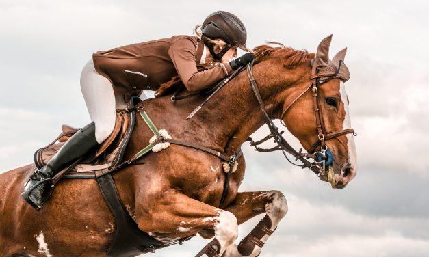 Testa din Min Häst-kunskap