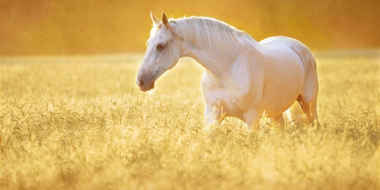 Vilken häst passar dig? -TEST