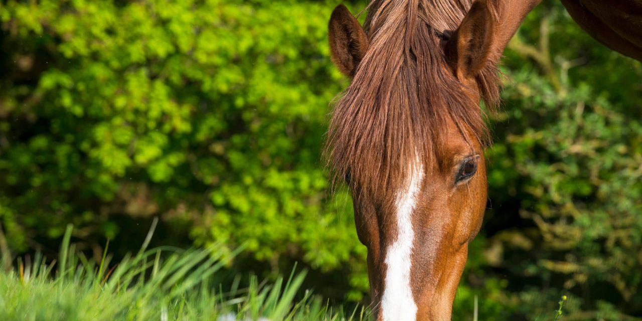 Gör hästen redo för sommaren