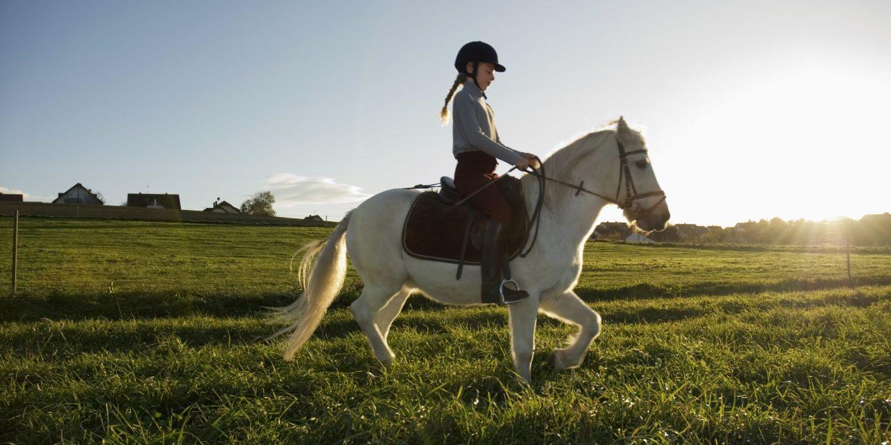 Tar du hand om dig själv lika bra som hästen? – TEST