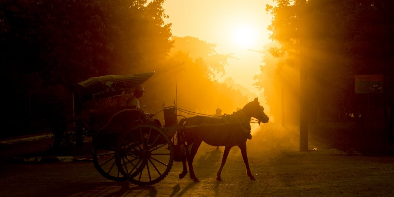 Hästens historia – test