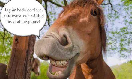 7 anledningar till att strunta i bilen och köpa häst