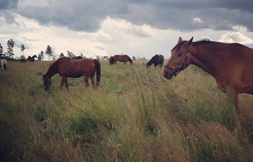 Hästens 4 F – del 1