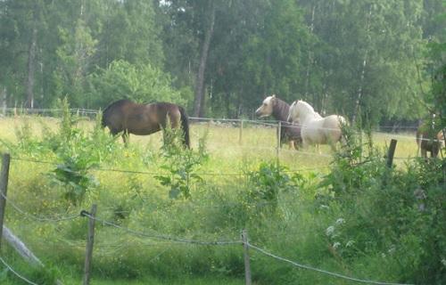 Hästens 4 F – del 3