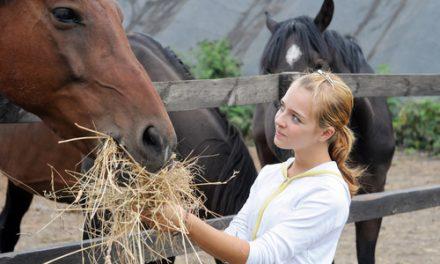 Hyra häst eller vara fodervärd?