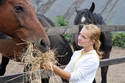fodervärd till häst