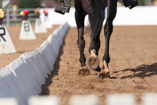 DEL 3. Rida ny häst – så gör du
