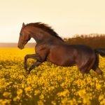 När din häst blir för varm