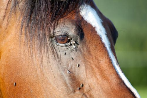 Hundratals i ko da tar veterinaren emot