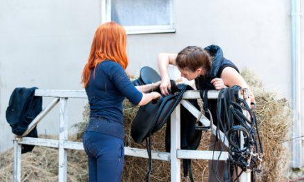 Saker du kan göra när du inte har möjlighet att gå till stallet – Del 1