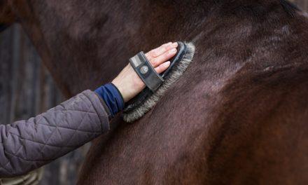 Hur är det att vara hästskötare? – Emelie och Fia