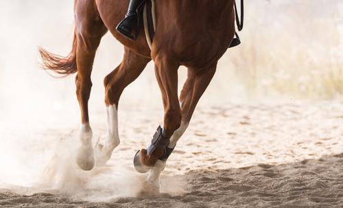 allt om hästar och ridning