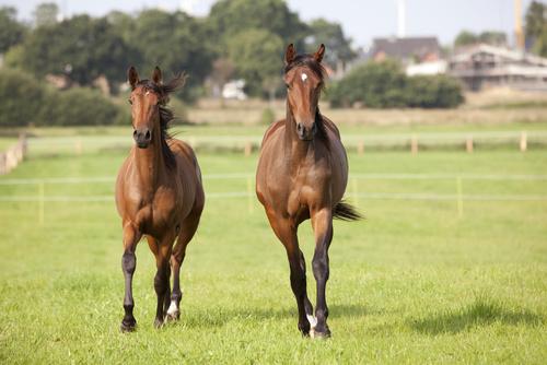 Vilken alternativ hästsport passar dig? – TEST