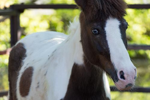 Saknar hästen på loven – Anna svarar