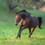 Hur mycket kan du om hästens skador och sjukdomar?