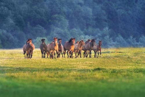 Vem är din älsklingshäst när du blir stor?