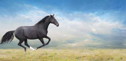 Kallblod och varmblod – luriga hästord från A-Ö