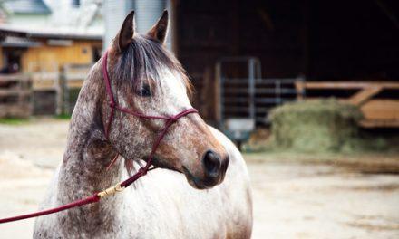Bind upp hästen rätt!