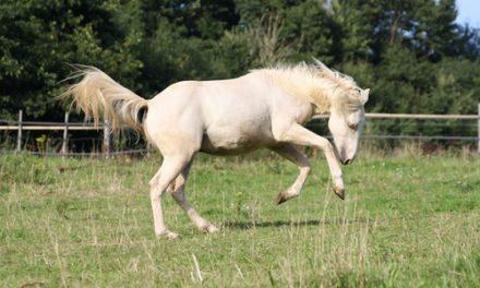Häst som bockar och stegrar – Anna svarar
