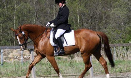 Sitsen och sadeln – dressyr