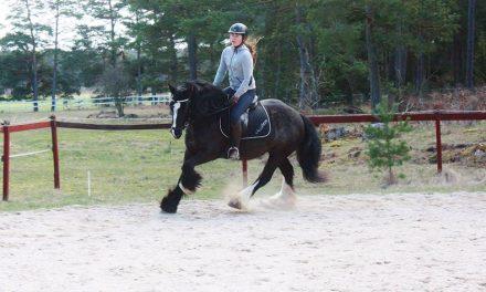 10 saker du bara förstår om du är häst-människa